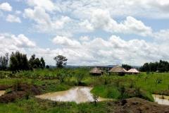 Upendo (love) garden