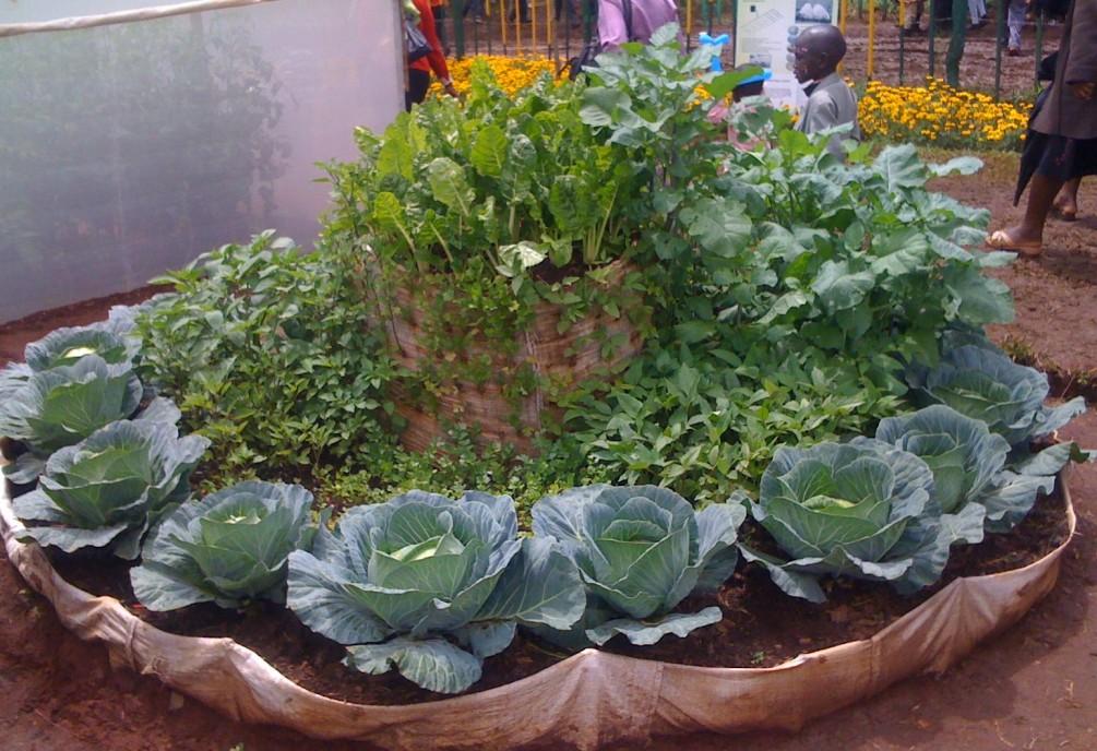 The OTEPIC garden