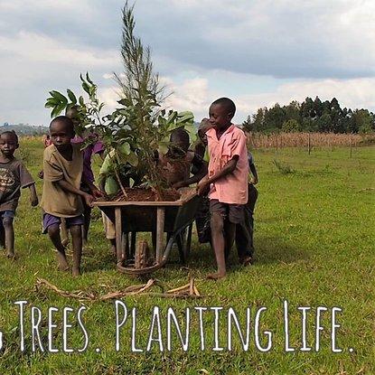 TREE PLANTING-in this rainy season